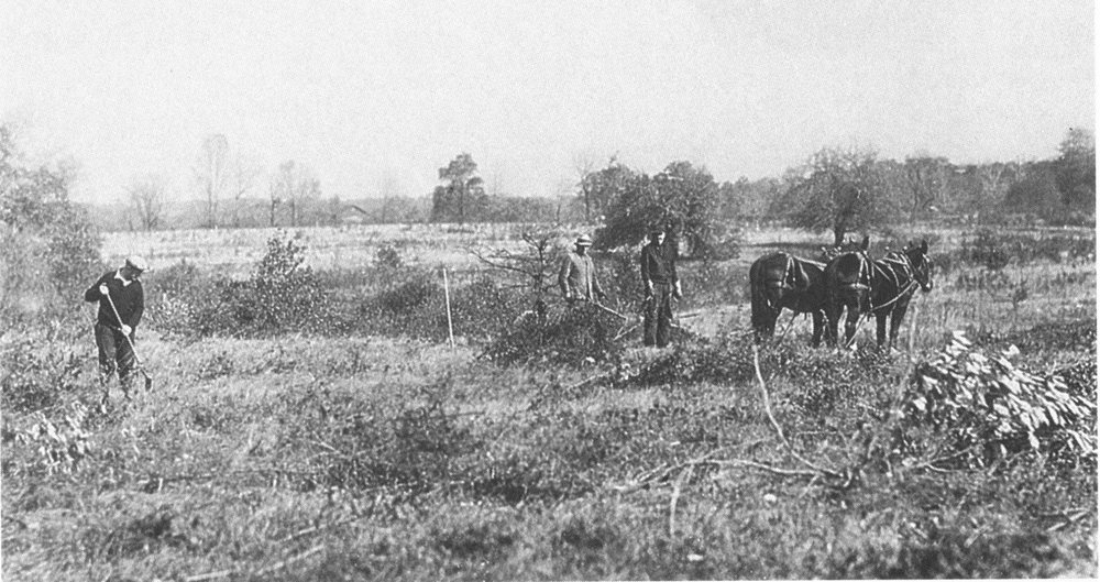 Clearing brush at Holden Arboretum, a year prior to the park's formal opening.