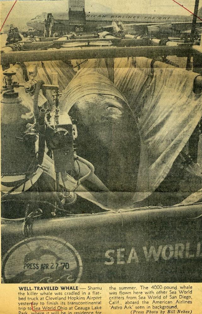 Shamu, the Killer Whale, 1970