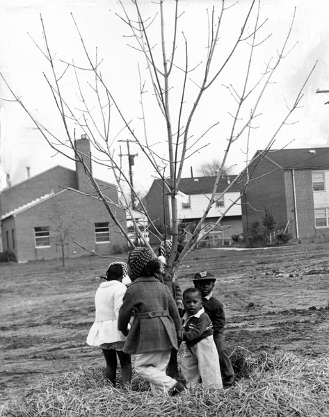 Planting a Tree in Garden Valley