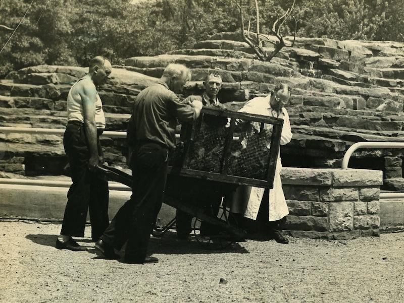 Populating Monkey Island, 1936