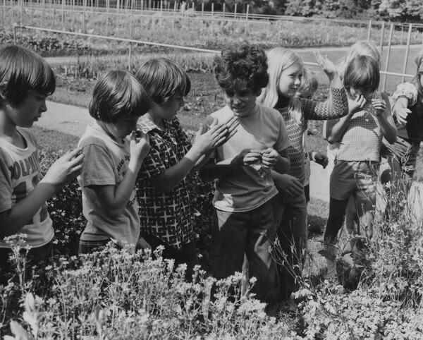 In the Garden, June 1976