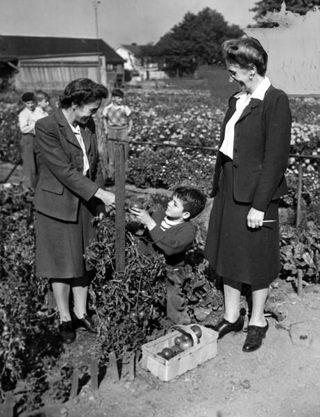 Tomato Harvest, Oct. 1946