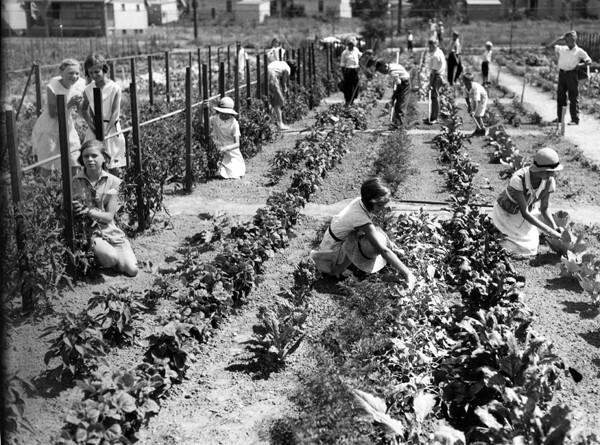 Vegetable Garden, July 1933