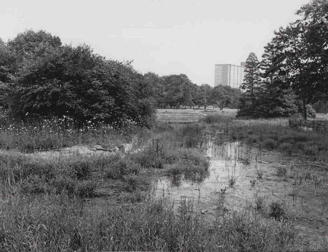 Drained Lagoon, July 1978